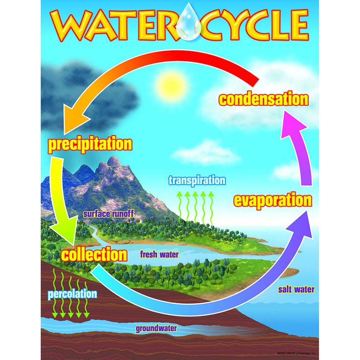 46 best water cycle images on pinterest water cycle bicycles and chart the water cycle ccuart Choice Image