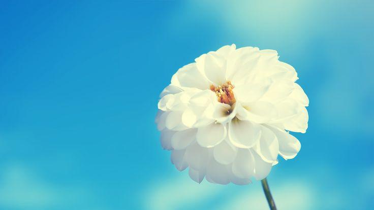 White Flower Background - http://whatstrendingonline.com/white-flower-background/