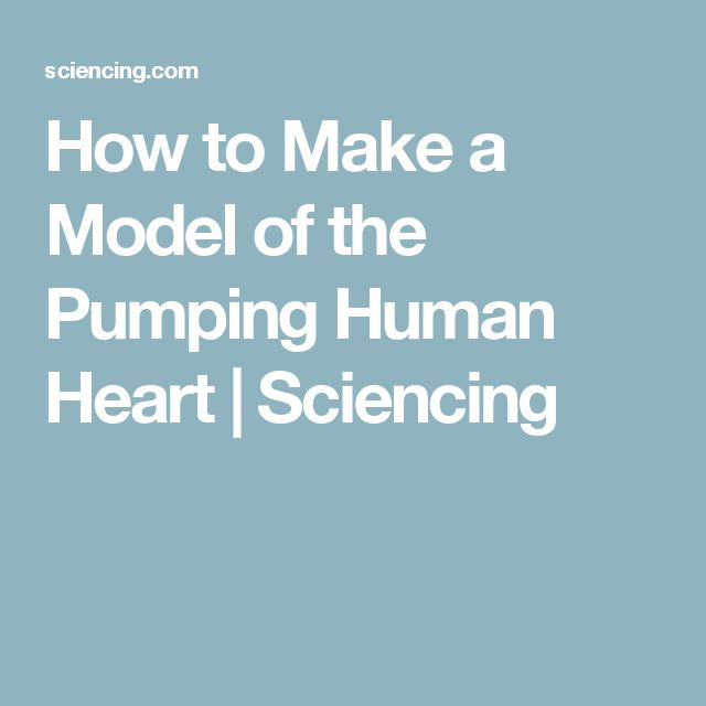 How to Make a Model of the Pumping Human Heart | Sciencing