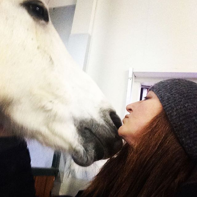 HORSE COMPANION | LIVING AND WORKING WITH HORSES