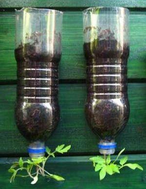 /77/LevensstiHangpot Om ecologischer bijvoorbeeld tomaten en aardbeien te kweken, kan je uit petflessen hangpotten maken. Snijd het bovenste deel van de fles. Ga verder aan de slag met de bodem. Maak een gat in de bodem en steek het plantje er omgekeerd door. Vul de onderkant op met grond. Hang de halve petfles nu met ijzerdraad op. Nu kan het plantje hangend naar omlaag groeien. Zo heb je geen stokken nodig om je plantjes te ondersteunen. Vergeet ze alleen geen water te geven!