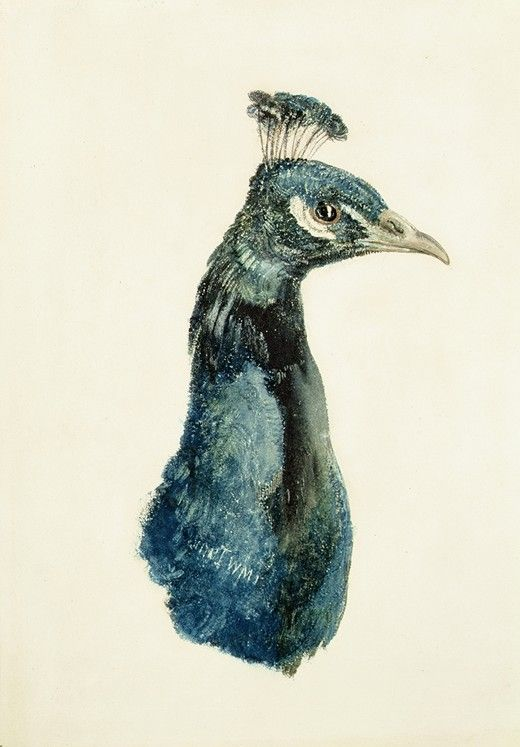 JMW Turner, Peacock