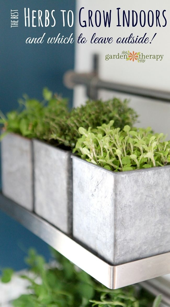 Herbs are outdoor plants. There are many plants that can grow well as houseplants but herbs are not among them. But that doesn't mean that you shouldn't choose herbs to grow indoors. This article covers which herbs to grow indoors as well as some that you should leave outside. Once you have your list head over to get a healthy ...