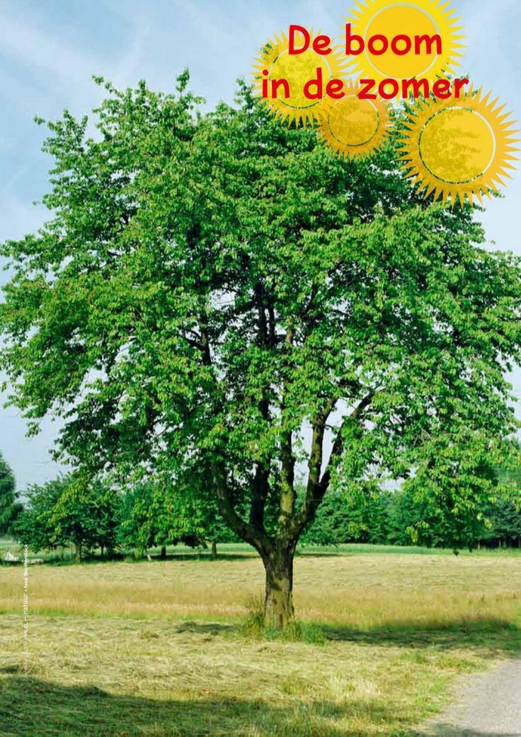 De boom in de zomer @keireeen