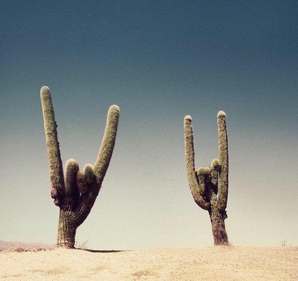 punk cactus Plus