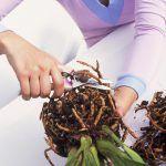 Rien de plus efficace que le bouturage pour multiplier facilement vos plantes ! Voici quelques conseils qui vous aideront à effectuer facilement une bouture avec vos orchidées.
