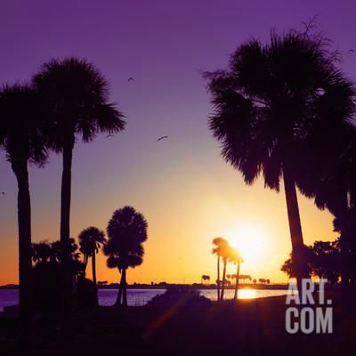Silhouette Palm Trees at Sunset Photographic Print by Philippe Hugonnard at Art.co.uk