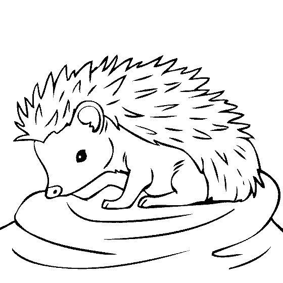 Attractive Baby Hedgehog Coloring Page