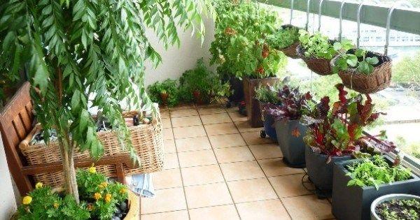 The Basics For Starting An Apartment Vegetable Garden