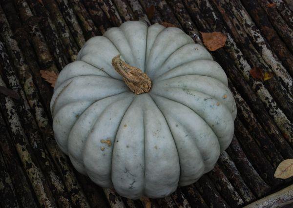 ~*- Min høstvenn -*~ (Amariel of the Woodlands) My blue fairytale pumpkin! October 2014