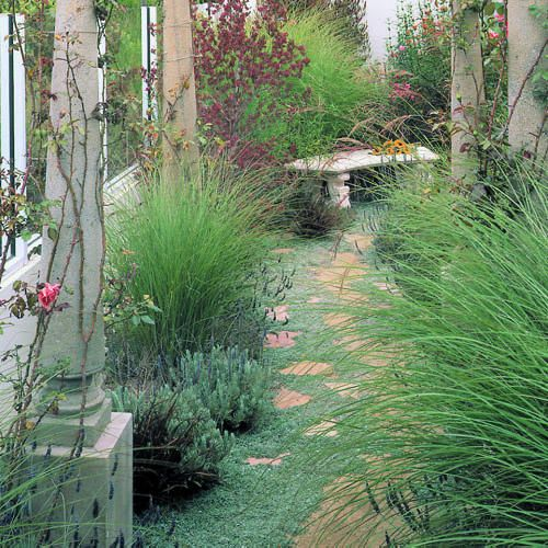 111 best images about ornamental grass ideas on pinterest for Border grasses for landscaping