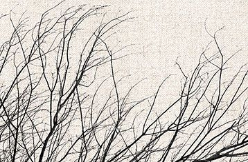 Branches - simplicity and beauty.