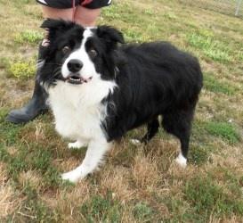 Adopt A Dog In Willmar Mn