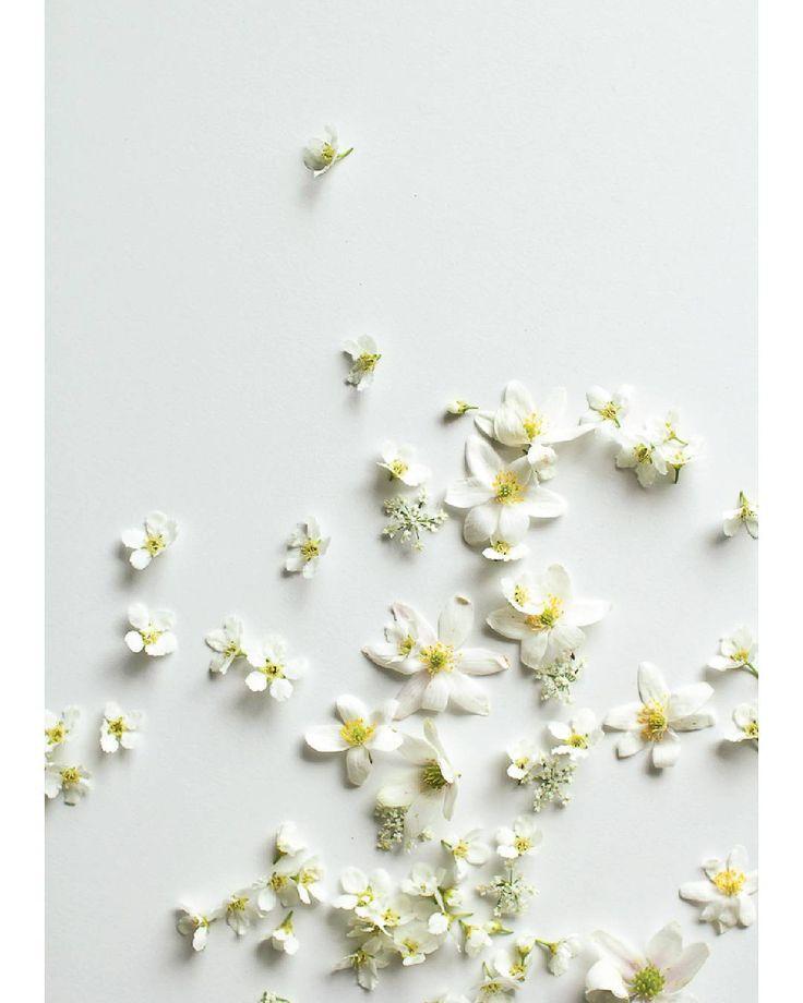 W h i t e  s p r i n g  /  #anemone #hvitveis #hegg #birdcherry #hundekjeks #cowparsely #postfortheaestethic #thatauthenticfeeling #stilllifegallery #spring #flowerpower