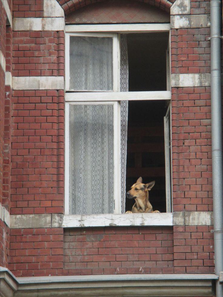 Danzig - der Hund löst die Oma ab :-)