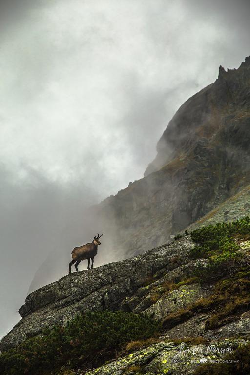 na szlaku w okolicach Zbójnickiej Chaty w Tatrach Wysokich / Tatra Mountains