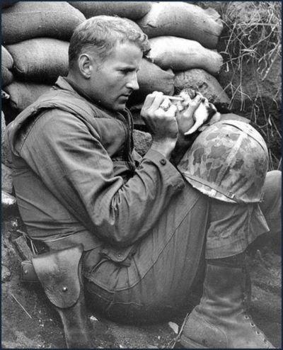 soldier / kitten
