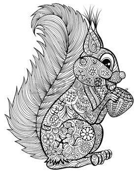 zentangle: Dibujado a mano ardilla divertida con la tuerca para el adulto anti-estrés para colorear con detalles altos aislados sobre fondo blanco, ilustración en estilo del zentangle. Ilustración monocromática del dibujo. Colección de la naturaleza.