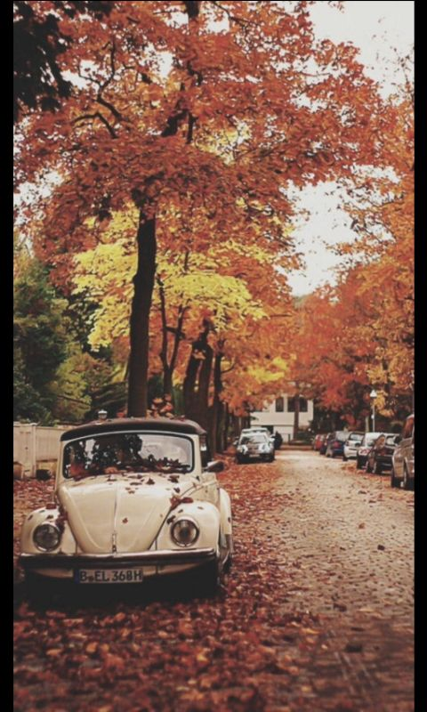 Autumn tumblr wallpaper | Autumn/Winter | Fall wallpaper ...