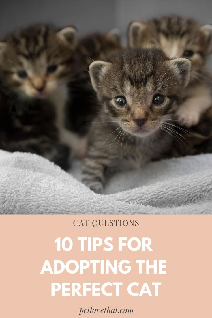 You Ve Been Thinking About It Haven T You You Ve Been Planning To Add Another Member To Your Household And Nothing Appeal Cat Questions Kitten Adoption Cats