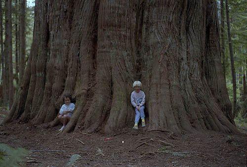 25 Best Ideas About Cedar Trees On Pinterest Yard Yard