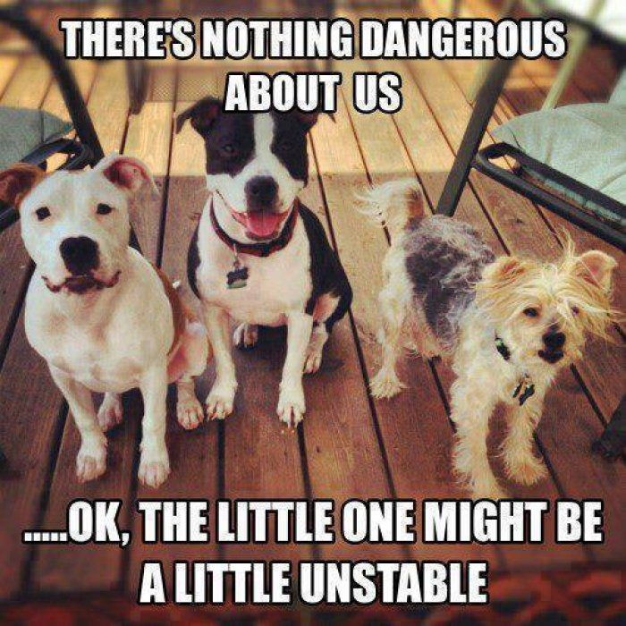 Theres nothing dangerous about us – dog meme