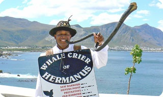 The town crier sounds out when whales are spotted - Hermanus.