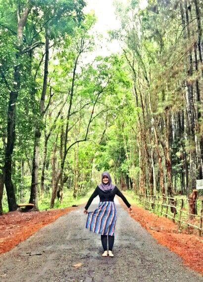 Hutan Pinus, Imogiri, Bantul, Yogyakarta, Indonesia.