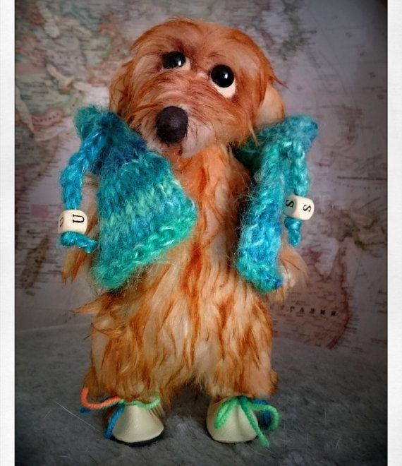 Teddy long haired dachshund Apelsinka  dachshund от Cosydachshund
