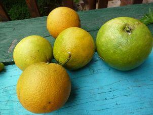 4 oranges and a grapefruit