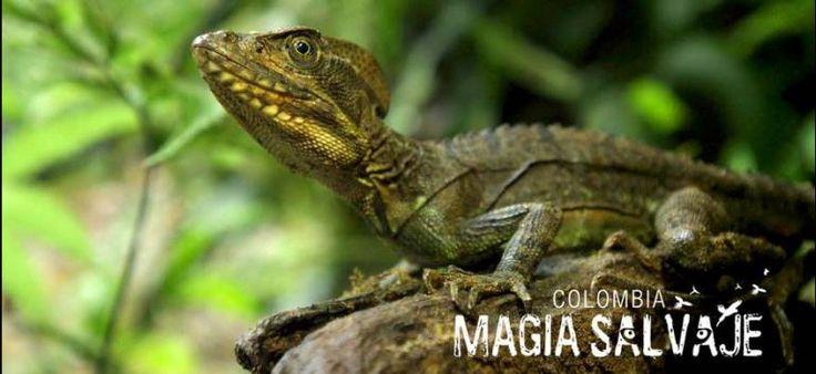 Resultado de imagen para magia salvaje colombia