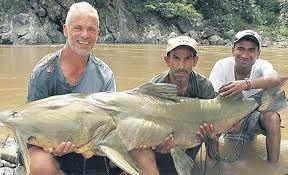 pez gato gigante          peces          este pez gigante pesó 292 kilogramos. puede sobrepasar los tres metros de longitud. Su hábitat principal son las aguas del cauce bajo del sistema fluvial del Mekong, que abarca los países de Laos, Camboya, Tailandia y Vietnam