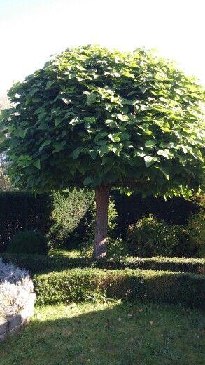 Mooie boom in de tuin van ons tijdelijke huis