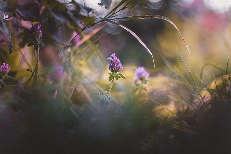 Verde de Kristina Manchenko pe 500px