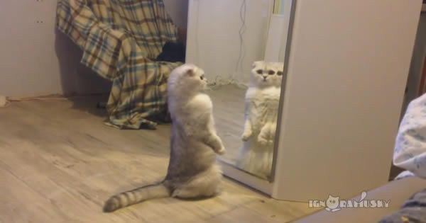 A vida chata de um gato doméstico