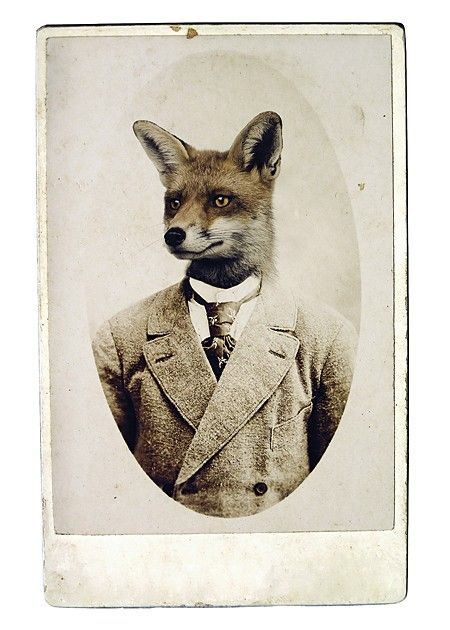 Completely obsessed with this dapper fox... Young Mr. Fox ... Melissa Nucera