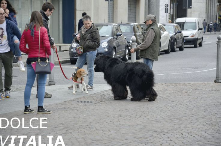 Famous dog of Brescia :-)