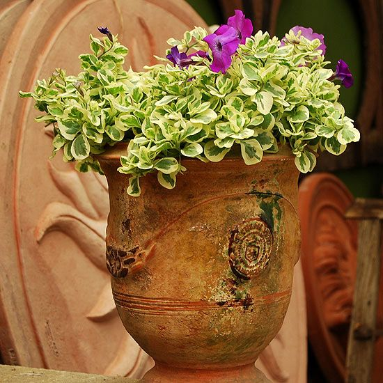 Variegated Foliage And Flowers: A Collection Of Ideas To