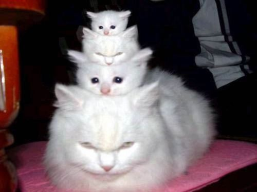 3 little kitties!! I am sure this is Photoshopped, but its still funny!