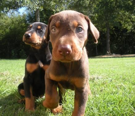 Too cute! wish rico was still a pup