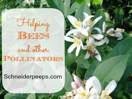 how to create a native bee habitat in your backyard book review
