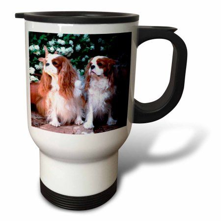 3dRose Two Blenheim Cavalier King Spaniel, Travel Mug, 14oz, Stainless Steel