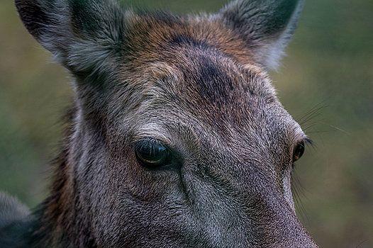 Deer by Katarzyna Szymanska