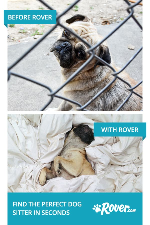 Skip the kennel guilt and try a Rover dog sitter. You can book a trusted neighborhood dog sitter right from your computer or smartphone—it's that easy. Your dog gets personalized in-home care and you get cute photo updates while you're away. De-stress your holiday season by booking a Rover sitter. Sign up now for $20 off your first stay.
