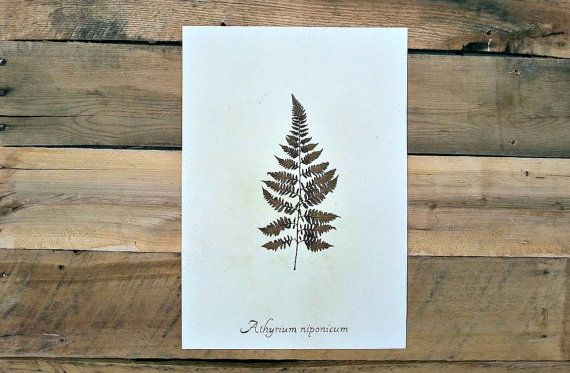 Real Pressed Japanese Painted Fern by Ecobota on Etsy, $45.00