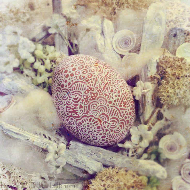 """shell""2016"