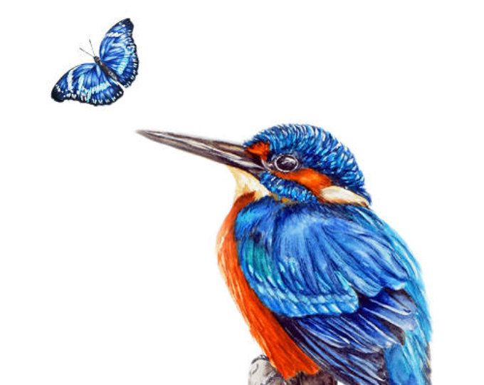 Kingfisher and Blue Butterfly -  art print, bird paintings, watercolour print, watercolour bird painting
