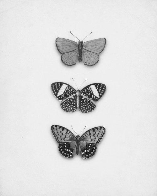 sommerfugle