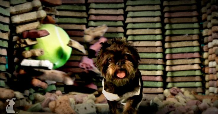 """Contemporary #MusicVideo culture = constant remixing and reinvention: Miley Cyrus' """"Wrecking Ball"""" gets the puppy parody you didn't know you were waiting for @Mashable"""