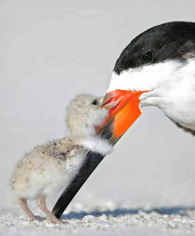 Mamas Liebe